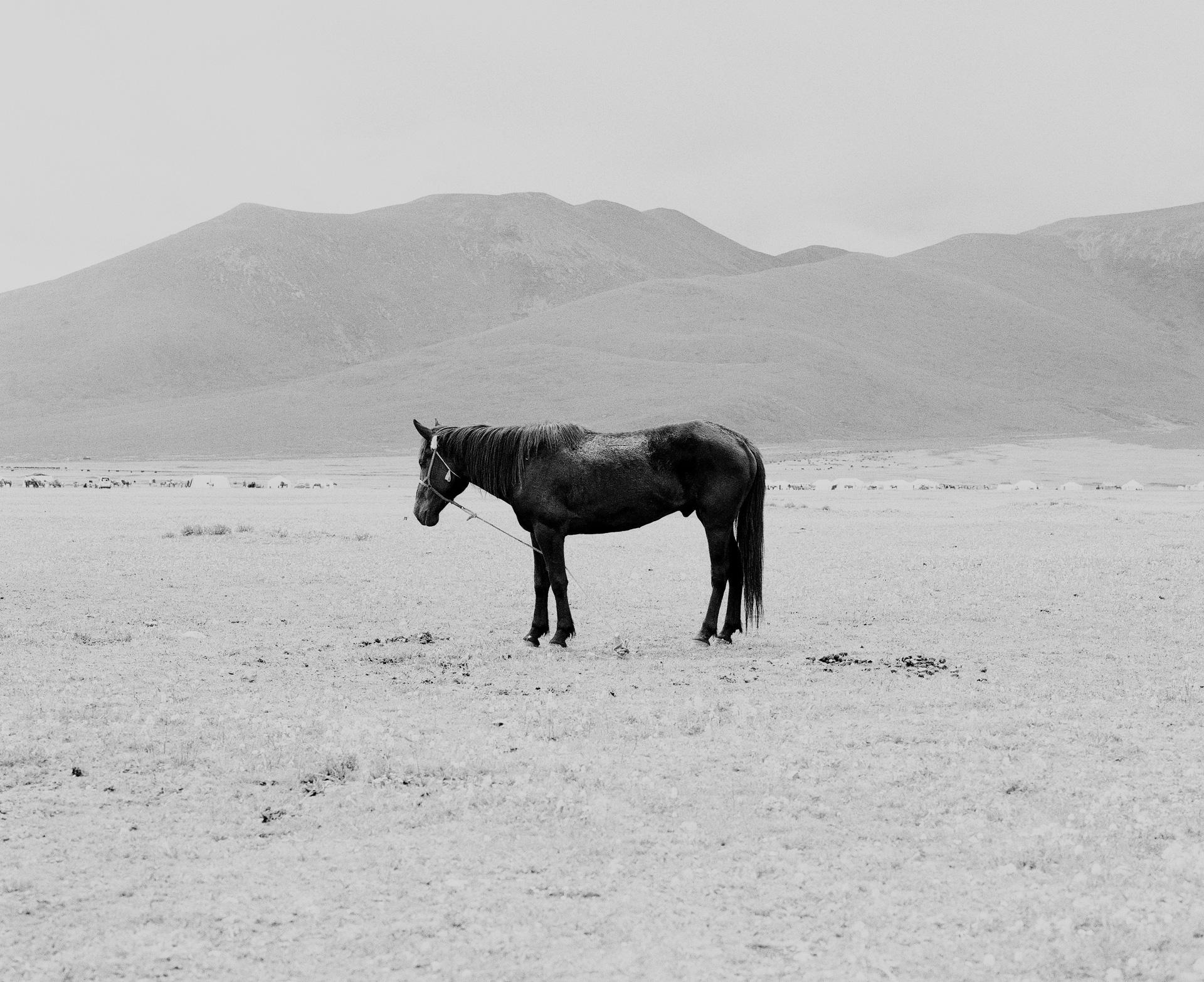 22-lighter-horse-bw-lighter-web